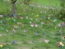 /ogv/img/pix/2009_Gartenschau/DSC05243.JPG