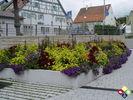 /ogv/img/pix/2009_Gartenschau/DSC05268.JPG