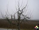 /ogv/img/pix/2009_Hochstammschnitt/SANY0822.JPG