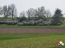 /ogv/img/pix/2010_Bluetenwanderung/DSC05890.JPG