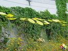 /ogv/img/pix/2011_Gartenschau_Horb/DSC08717.JPG